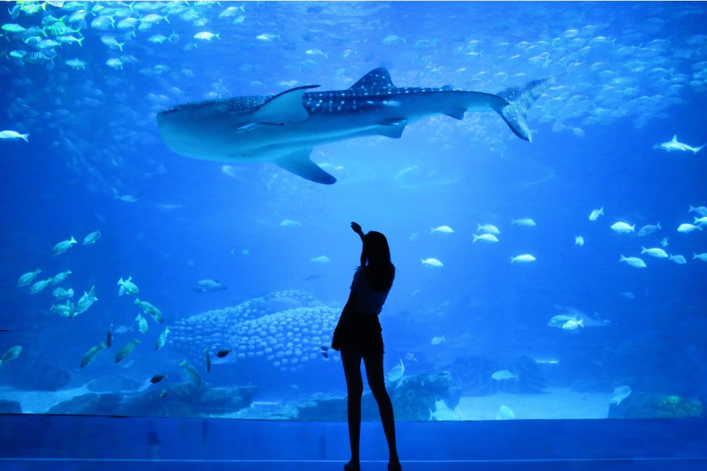 acquario barcellona orari