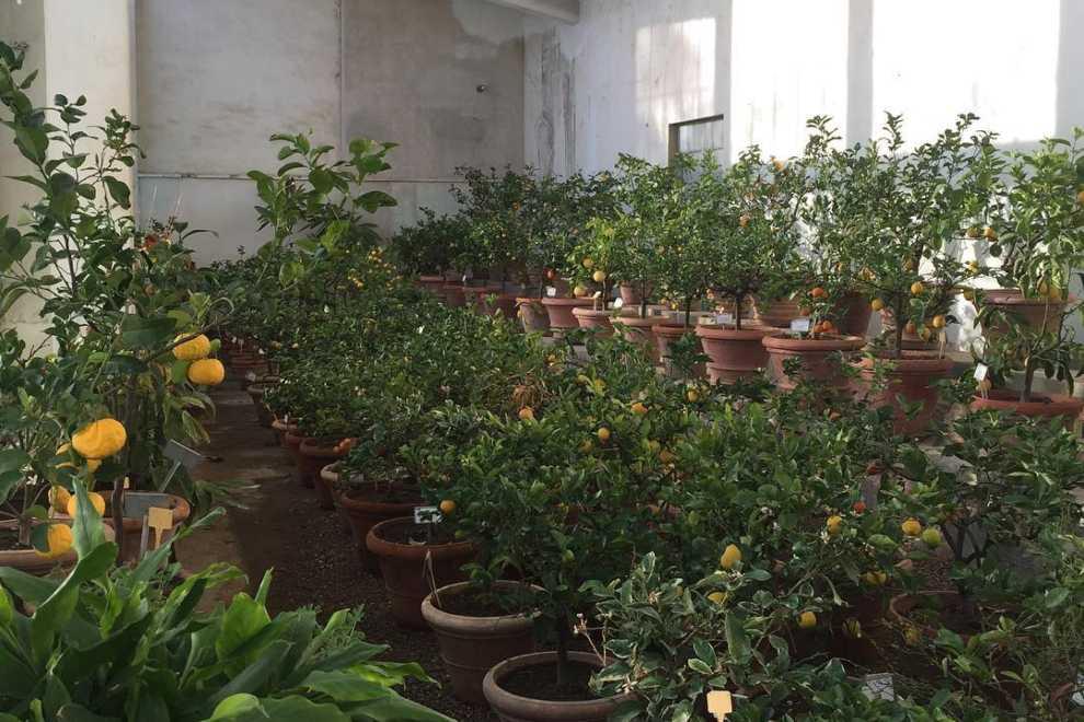 firenze giardino boboli